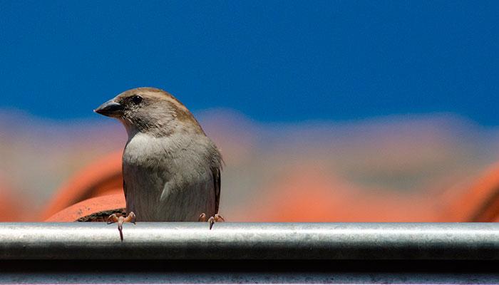 Nidos de aves atascando los canalones