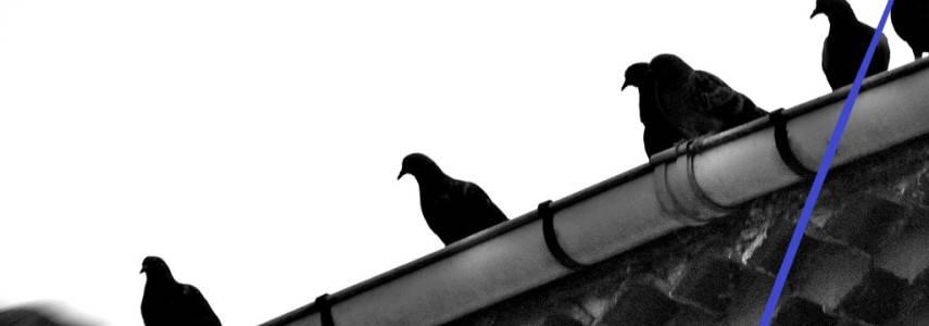 Sistemas Para Evitar Que Las Aves Aniden En Los Canalones