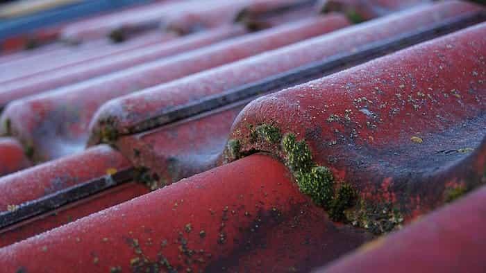 Cómo retirar el musgo de los canalones cuando tienen colocados salvahojas